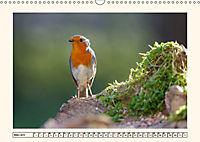 Gefiederte Schönheiten - Das Rotkehlchen (Wandkalender 2019 DIN A3 quer) - Produktdetailbild 3