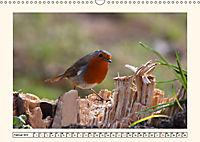 Gefiederte Schönheiten - Das Rotkehlchen (Wandkalender 2019 DIN A3 quer) - Produktdetailbild 2