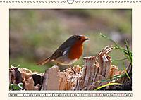 Gefiederte Schönheiten - Das Rotkehlchen (Wandkalender 2019 DIN A3 quer) - Produktdetailbild 4
