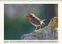 Gefiederte Schönheiten - Das Rotkehlchen (Wandkalender 2019 DIN A3 quer) - Produktdetailbild 8