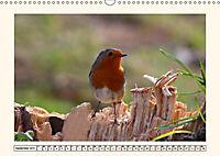 Gefiederte Schönheiten - Das Rotkehlchen (Wandkalender 2019 DIN A3 quer) - Produktdetailbild 9