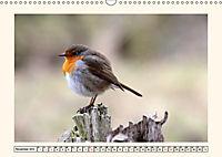 Gefiederte Schönheiten - Das Rotkehlchen (Wandkalender 2019 DIN A3 quer) - Produktdetailbild 11