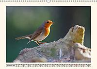 Gefiederte Schönheiten - Das Rotkehlchen (Wandkalender 2019 DIN A3 quer) - Produktdetailbild 12