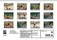 Gefiederte Schönheiten - Das Rotkehlchen (Wandkalender 2019 DIN A3 quer) - Produktdetailbild 13