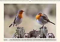 Gefiederte Schönheiten - Das Rotkehlchen (Wandkalender 2019 DIN A3 quer) - Produktdetailbild 6