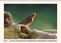 Gefiederte Schönheiten - Das Rotkehlchen (Wandkalender 2019 DIN A3 quer) - Produktdetailbild 5