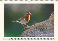 Gefiederte Schönheiten - Das Rotkehlchen (Wandkalender 2019 DIN A3 quer) - Produktdetailbild 10