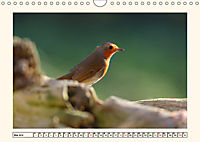 Gefiederte Schönheiten - Das Rotkehlchen (Wandkalender 2019 DIN A4 quer) - Produktdetailbild 5