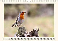 Gefiederte Schönheiten - Das Rotkehlchen (Wandkalender 2019 DIN A4 quer) - Produktdetailbild 1