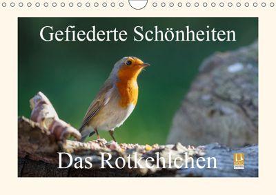 Gefiederte Schönheiten - Das Rotkehlchen (Wandkalender 2019 DIN A4 quer), Rolf Pötsch