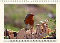 Gefiederte Schönheiten - Das Rotkehlchen (Wandkalender 2019 DIN A4 quer) - Produktdetailbild 9