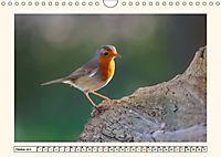 Gefiederte Schönheiten - Das Rotkehlchen (Wandkalender 2019 DIN A4 quer) - Produktdetailbild 10