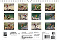 Gefiederte Schönheiten - Das Rotkehlchen (Wandkalender 2019 DIN A4 quer) - Produktdetailbild 13