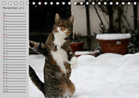 geliebte Katzen - auf Samtpfoten durchs Jahr (Tischkalender 2019 DIN A5 quer) - Produktdetailbild 11