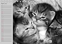 geliebte Katzen - auf Samtpfoten durchs Jahr (Tischkalender 2019 DIN A5 quer) - Produktdetailbild 4
