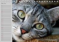 geliebte Katzen - auf Samtpfoten durchs Jahr (Tischkalender 2019 DIN A5 quer) - Produktdetailbild 7