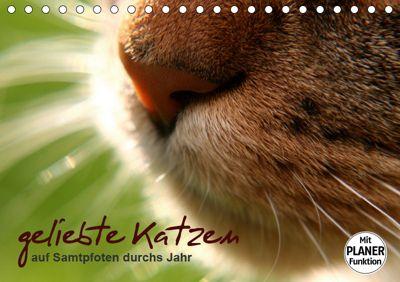 geliebte Katzen - auf Samtpfoten durchs Jahr (Tischkalender 2019 DIN A5 quer), Isabel Schöne