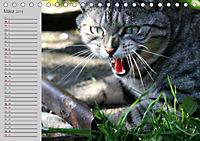 geliebte Katzen - auf Samtpfoten durchs Jahr (Tischkalender 2019 DIN A5 quer) - Produktdetailbild 3