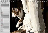 geliebte Katzen - auf Samtpfoten durchs Jahr (Tischkalender 2019 DIN A5 quer) - Produktdetailbild 8