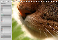 geliebte Katzen - auf Samtpfoten durchs Jahr (Tischkalender 2019 DIN A5 quer) - Produktdetailbild 6