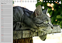 geliebte Katzen - auf Samtpfoten durchs Jahr (Tischkalender 2019 DIN A5 quer) - Produktdetailbild 5