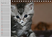 geliebte Katzen - auf Samtpfoten durchs Jahr (Tischkalender 2019 DIN A5 quer) - Produktdetailbild 12