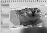 geliebte Katzen - auf Samtpfoten durchs Jahr (Tischkalender 2019 DIN A5 quer) - Produktdetailbild 9