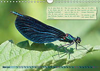 GEOclick Lernkalender: Insekten (Wandkalender 2019 DIN A4 quer) - Produktdetailbild 3