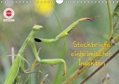 GEOclick Lernkalender: Insekten (Wandkalender 2019 DIN A4 quer), Klaus Feske