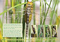 GEOclick Lernkalender: Insekten (Wandkalender 2019 DIN A4 quer) - Produktdetailbild 6