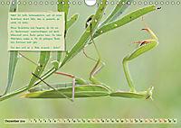 GEOclick Lernkalender: Insekten (Wandkalender 2019 DIN A4 quer) - Produktdetailbild 12