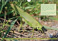 GEOclick Lernkalender: Insekten (Wandkalender 2019 DIN A4 quer) - Produktdetailbild 10