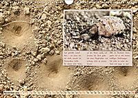 GEOclick Lernkalender: Insekten (Wandkalender 2019 DIN A4 quer) - Produktdetailbild 11
