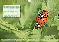 GEOclick Lernkalender: Insekten (Wandkalender 2019 DIN A4 quer) - Produktdetailbild 9