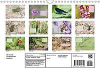 GEOclick Lernkalender: Insekten (Wandkalender 2019 DIN A4 quer) - Produktdetailbild 13