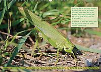 GEOclick Lernkalender: Insekten (Wandkalender 2019 DIN A2 quer) - Produktdetailbild 10