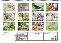 GEOclick Lernkalender: Insekten (Wandkalender 2019 DIN A2 quer) - Produktdetailbild 13