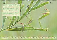 GEOclick Lernkalender: Insekten (Wandkalender 2019 DIN A2 quer) - Produktdetailbild 12