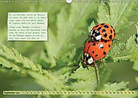 GEOclick Lernkalender: Insekten (Wandkalender 2019 DIN A3 quer) - Produktdetailbild 9