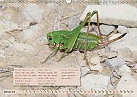 GEOclick Lernkalender: Insekten (Wandkalender 2019 DIN A3 quer) - Produktdetailbild 1