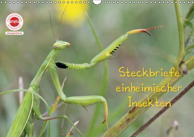GEOclick Lernkalender: Insekten (Wandkalender 2019 DIN A3 quer), Klaus Feske