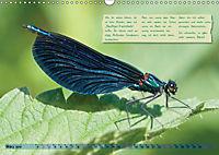 GEOclick Lernkalender: Insekten (Wandkalender 2019 DIN A3 quer) - Produktdetailbild 3