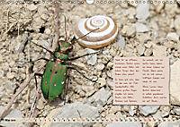 GEOclick Lernkalender: Insekten (Wandkalender 2019 DIN A3 quer) - Produktdetailbild 5