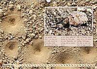 GEOclick Lernkalender: Insekten (Wandkalender 2019 DIN A3 quer) - Produktdetailbild 11
