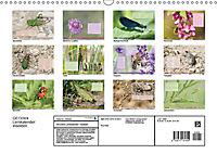 GEOclick Lernkalender: Insekten (Wandkalender 2019 DIN A3 quer) - Produktdetailbild 13