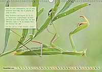 GEOclick Lernkalender: Insekten (Wandkalender 2019 DIN A3 quer) - Produktdetailbild 12