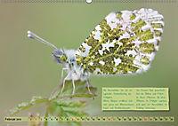 GEOclick Lernkalender: Steckbriefe einheimischer Schmetterlinge (Wandkalender 2019 DIN A2 quer) - Produktdetailbild 2