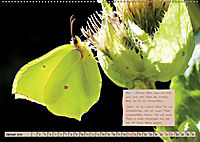 GEOclick Lernkalender: Steckbriefe einheimischer Schmetterlinge (Wandkalender 2019 DIN A2 quer) - Produktdetailbild 1