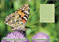 GEOclick Lernkalender: Steckbriefe einheimischer Schmetterlinge (Wandkalender 2019 DIN A2 quer) - Produktdetailbild 8