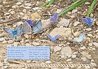 GEOclick Lernkalender: Steckbriefe einheimischer Schmetterlinge (Wandkalender 2019 DIN A2 quer) - Produktdetailbild 3